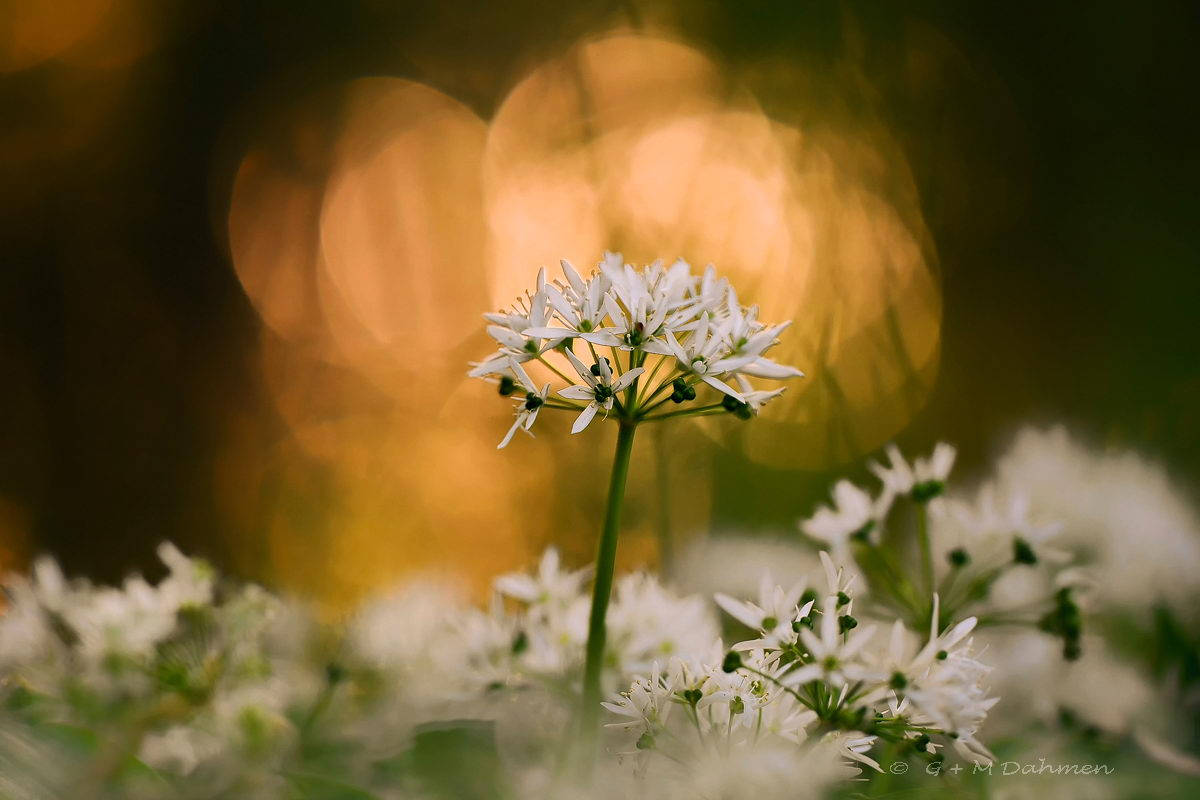 Pflanzen und Blumen Fotografie und Naturfotografie