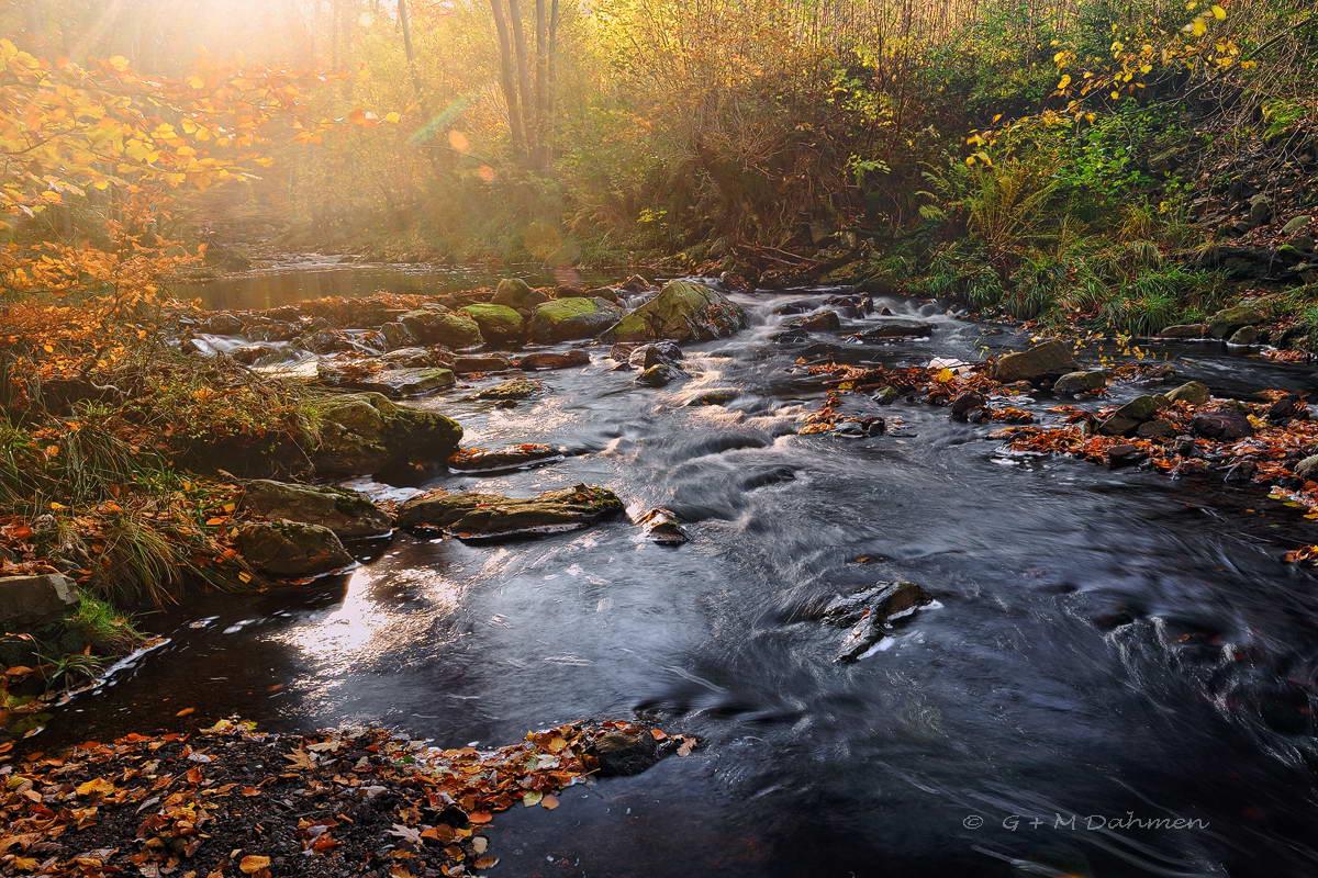 Wildbach La Hoegne im Morgenlicht