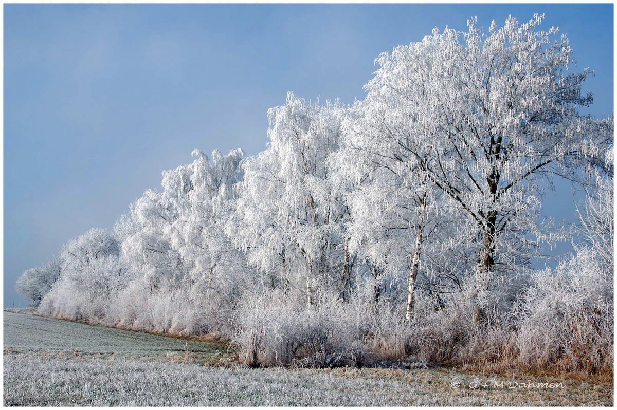 Winterlandschaft Eifel